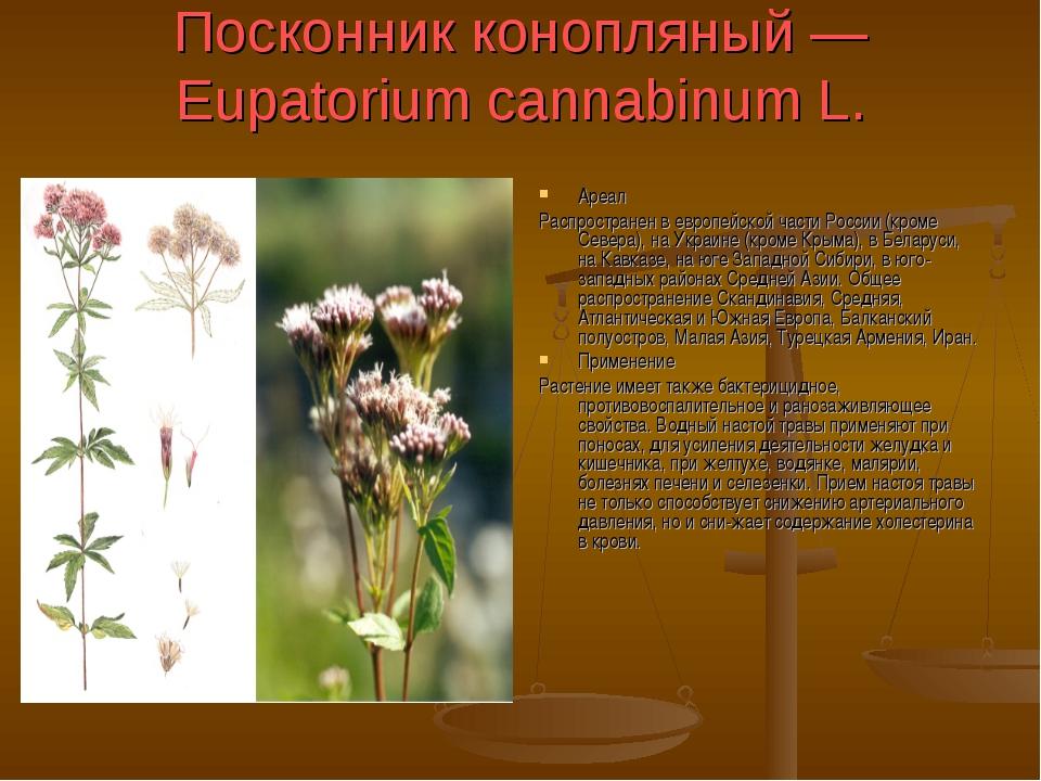Посконник конопляный — Eupatorium cannabinum L. Ареал Распространен в европей...