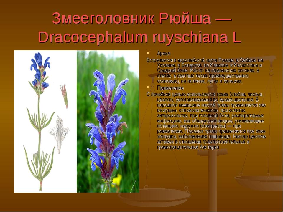 Змееголовник Рюйша — Dracocephalum ruyschiana L Ареал Встречается в европейск...