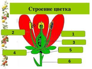 Лепесток 1 Тычинка 2 Цветоложе 4 Цветоножка 6 Чашелистик 5 пестик 3 Строение