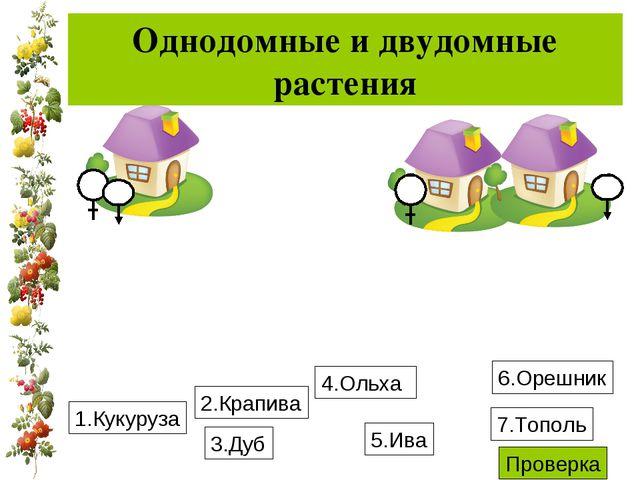 Однодомные и двудомные растения 1.Кукуруза 4.Ольха 3.Дуб 6.Орешник 2.Крапива...
