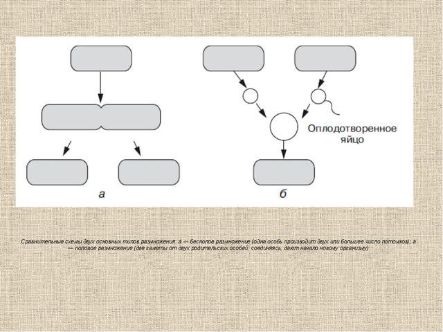 Сравнительные схемы двух основных типов размножения:à— бесполое размножение...