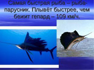 Самая быстрая рыба – рыба-парусник. Плывёт быстрее, чем бежит гепард – 109 к