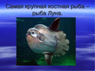 Самая крупная костная рыба – рыба Луна.