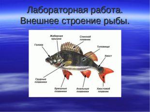Лабораторная работа. Внешнее строение рыбы.