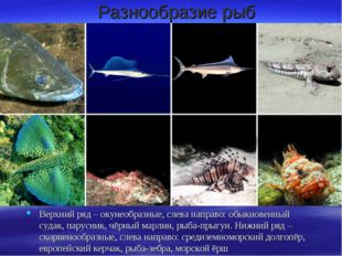 Разнообразие рыб Верхний ряд – окунеобразные, слева направо: обыкновенный суд