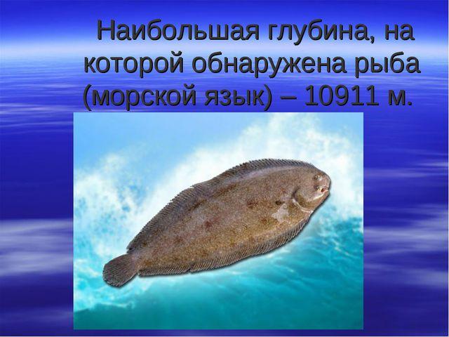 Наибольшая глубина, на которой обнаружена рыба (морской язык) – 10911 м.