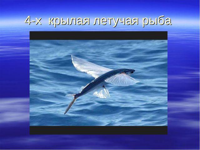 4-х крылая летучая рыба