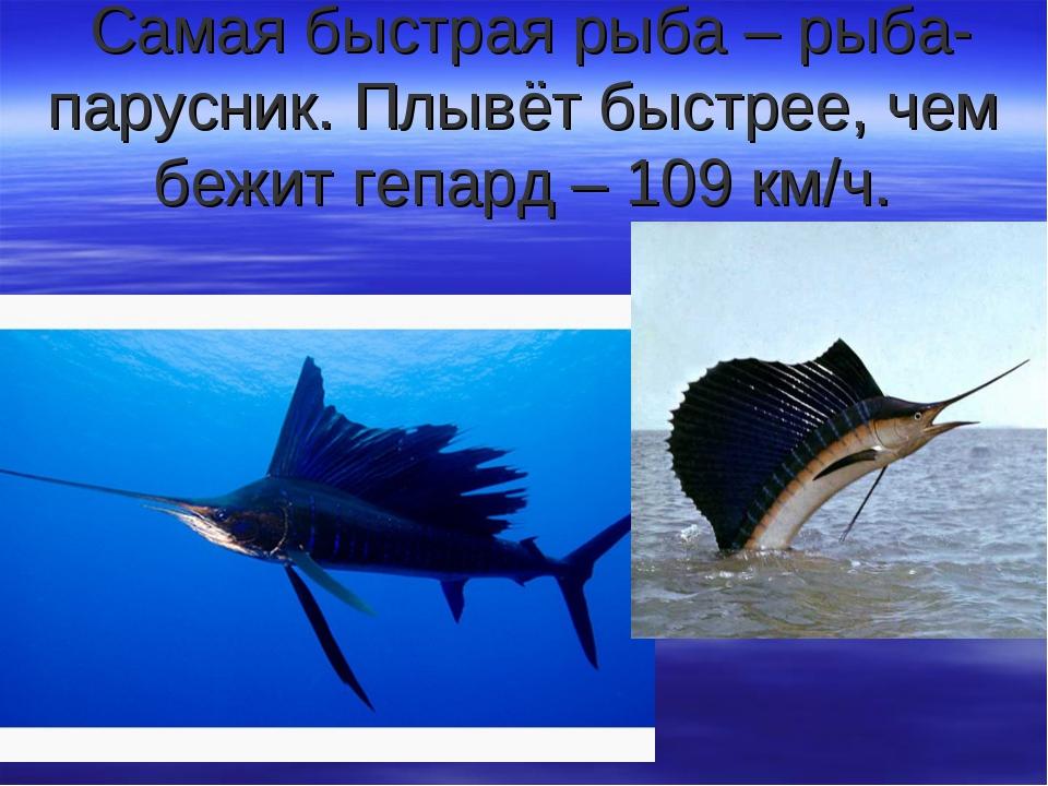 Самая быстрая рыба – рыба-парусник. Плывёт быстрее, чем бежит гепард – 109 к...