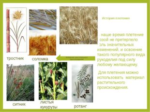 История плетения В наше время плетение лозой не претерпело коль значительных