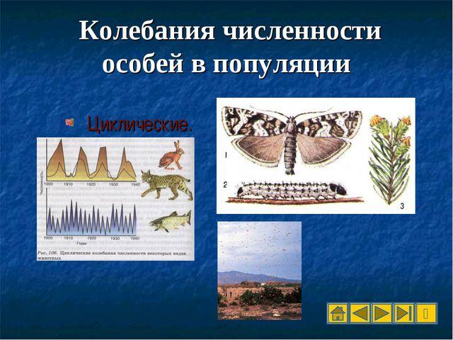 Колебания численности особей в популяции Циклические.