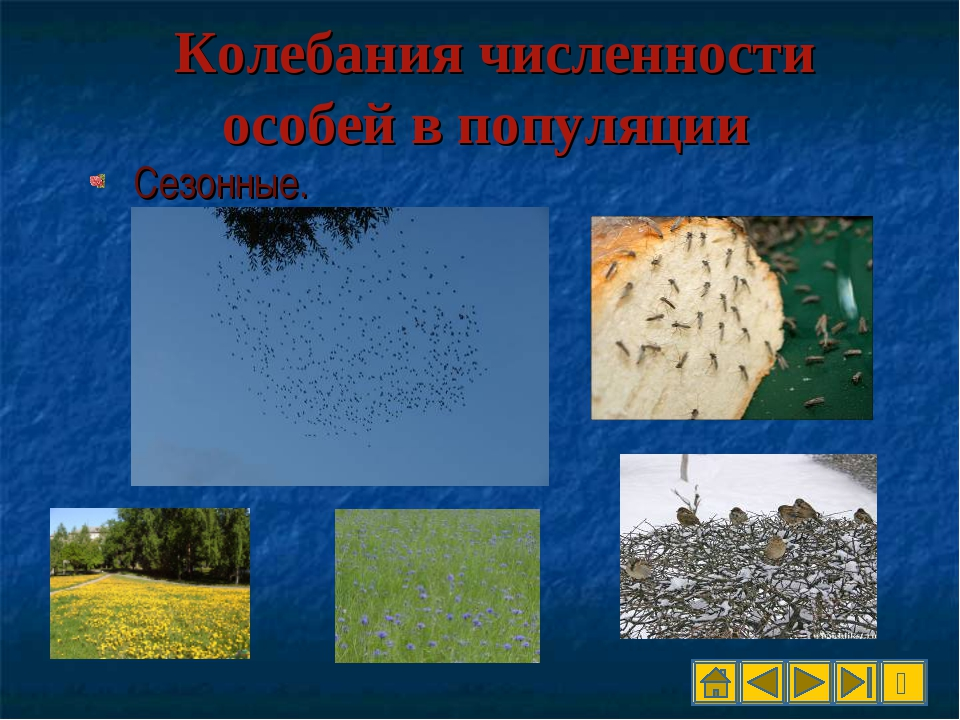 Колебания численности особей в популяции Сезонные.