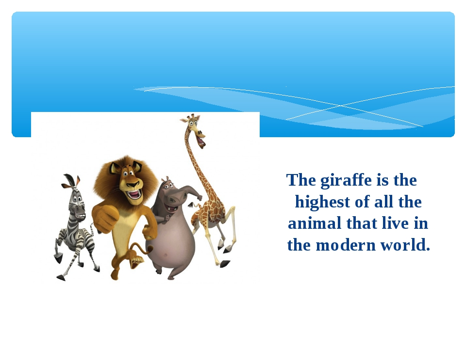 The giraffe is the highest of all the animal that live in the modern world.