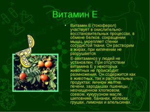 Витамин Е Витамин Е (токоферол) участвует в окислительно-восстановительных пр