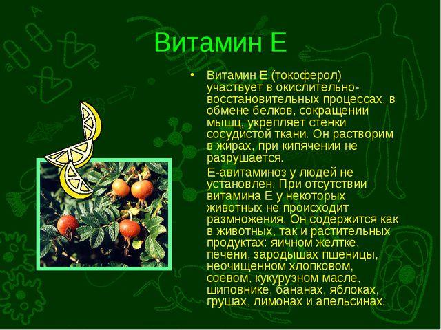 Витамин Е Витамин Е (токоферол) участвует в окислительно-восстановительных пр...