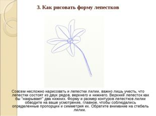 3. Как рисовать форму лепестков Совсем несложно нарисовать и лепестки лилии,