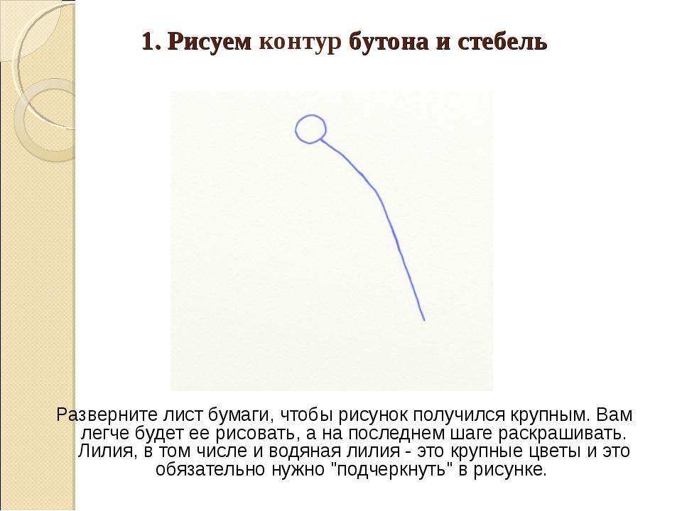 1. Рисуем контур бутона и стебель Разверните лист бумаги, чтобы рисунок получ...