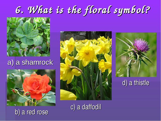 6. What is the floral symbol? a) a shamrock b) a red rose c) a daffodil d) a...