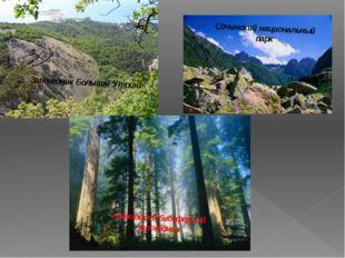 Сочинский национальный парк Кавказский биосферный заповедник Заповедник Больш