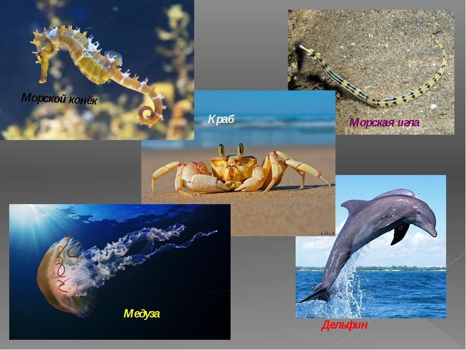 Морской конёк Морская игла Дельфин Медуза Краб