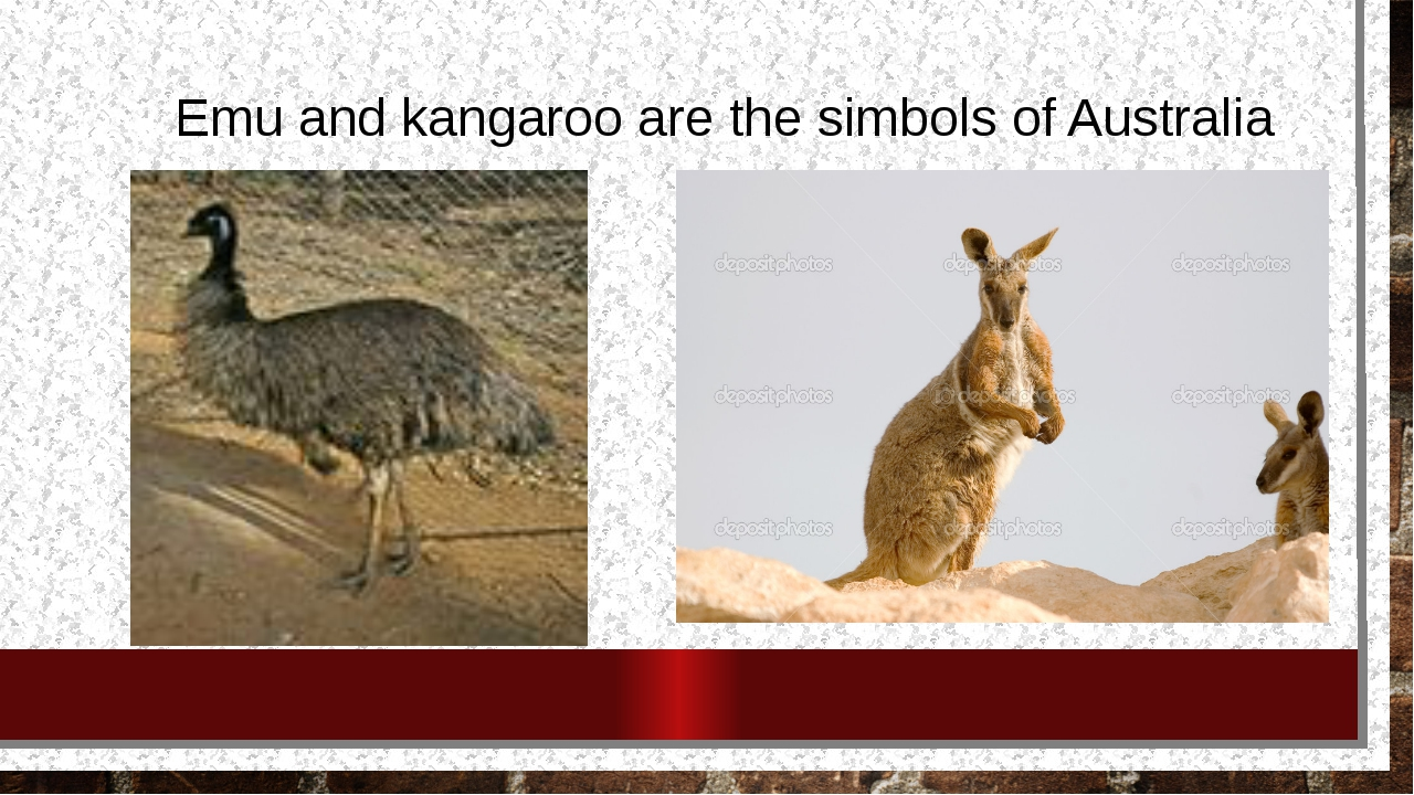 Emu and kangaroo are the simbols of Australia