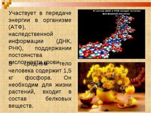 Участвует в передаче энергии в организме (АТФ), наследственной информации (ДН
