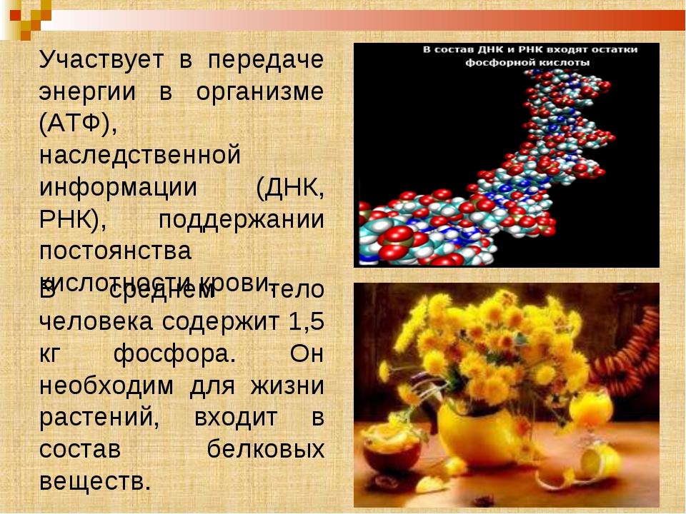 Участвует в передаче энергии в организме (АТФ), наследственной информации (ДН...