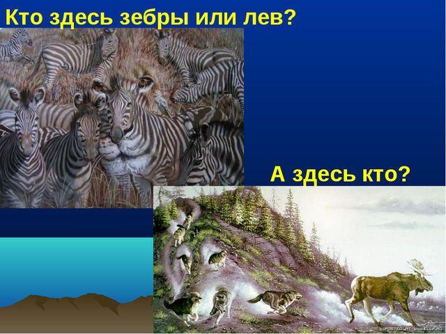 Кто здесь зебры или лев? А здесь кто?