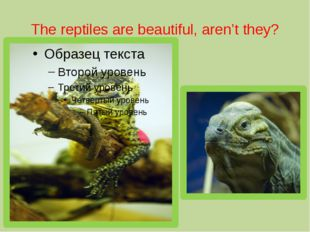 The reptiles are beautiful, aren't they?