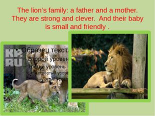 The lion's family: a father and a mother. They are strong and clever. And the