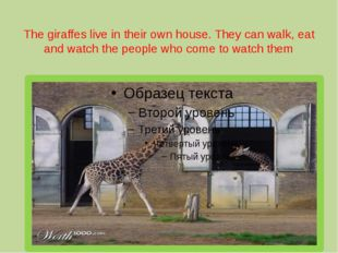 The giraffes live in their own house. They can walk, eat and watch the people