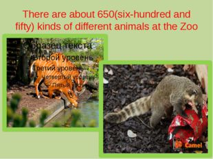 There are about 650(six-hundred and fifty) kinds of different animals at the