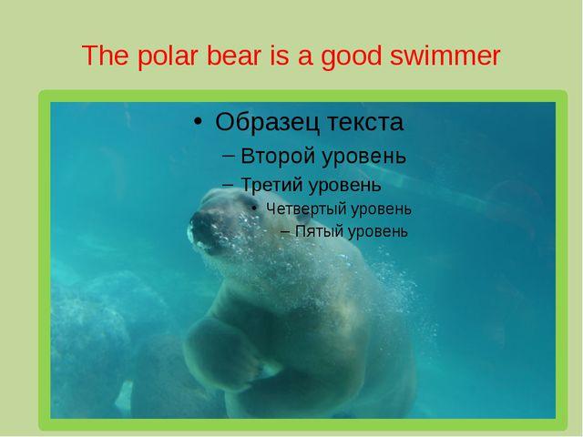 The polar bear is a good swimmer