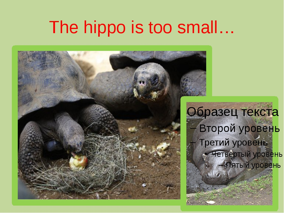 The hippo is too small…