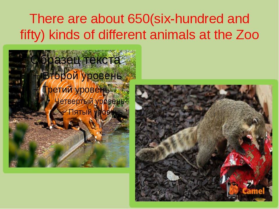 There are about 650(six-hundred and fifty) kinds of different animals at the...