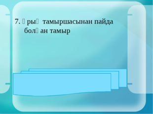 7. Ұрық тамыршасынан пайда болған тамыр ЖАУАБЫ: негізгі тамыр