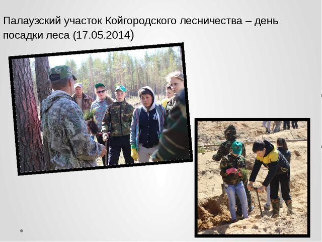 Палаузский участок Койгородского лесничества – день посадки леса (17.05.2014)