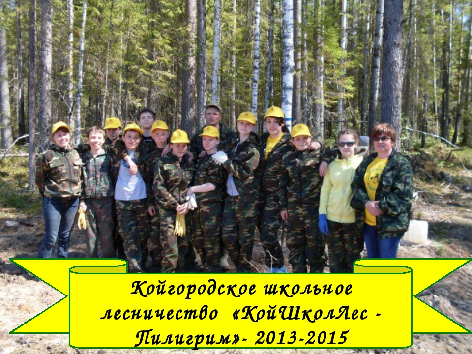 Койгородское школьное лесничество «КойШколЛес - Пилигрим»- 2013-2015