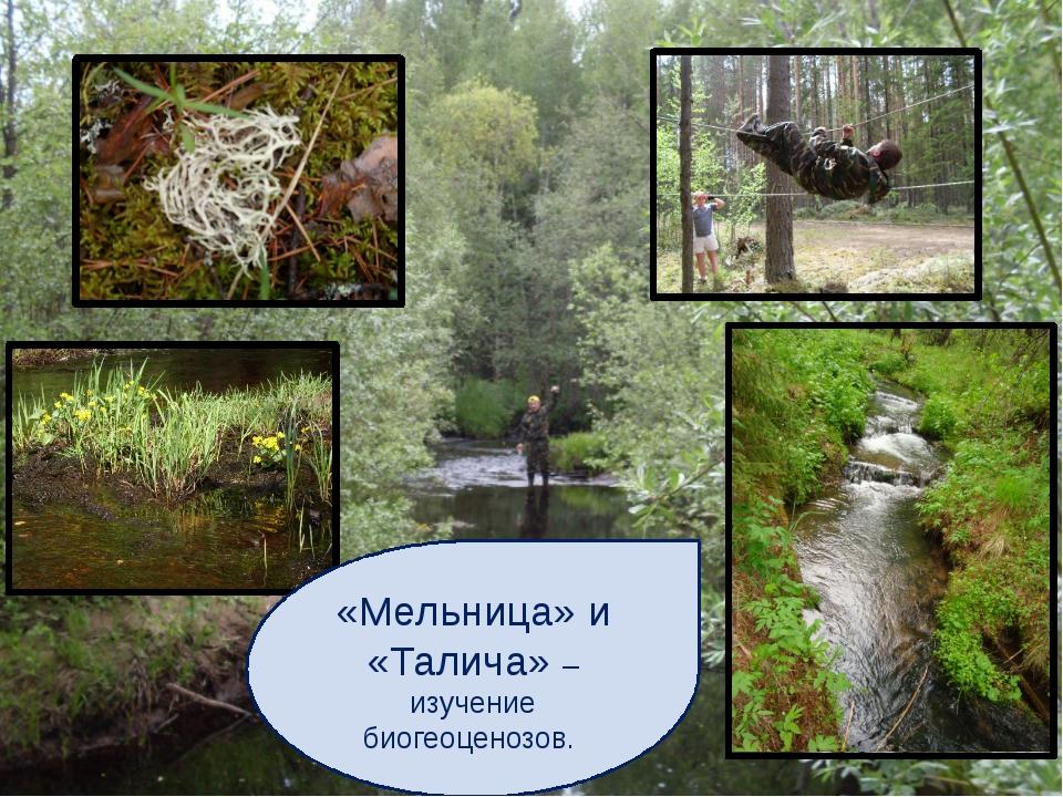 «Мельница» и «Талича» – изучение биогеоценозов.