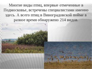 Многие виды птиц, впервые отмеченные в Подмосковье, встречены специалистами и