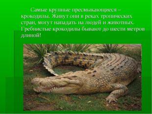 Самые крупные пресмыкающиеся – крокодилы. Живут они в реках тропических стр