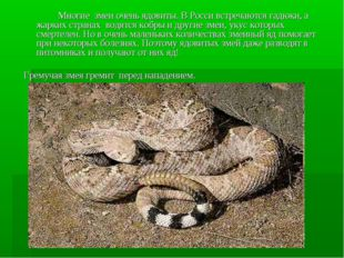 Многие змеи очень ядовиты. В Росси встречаются гадюки, а жарких странах вод