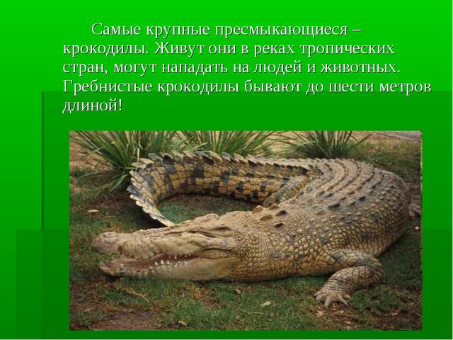 Самые крупные пресмыкающиеся – крокодилы. Живут они в реках тропических стр...