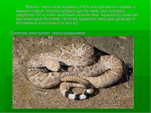 Многие змеи очень ядовиты. В Росси встречаются гадюки, а жарких странах вод...