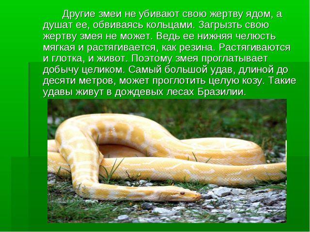 Другие змеи не убивают свою жертву ядом, а душат ее, обвиваясь кольцами. За...