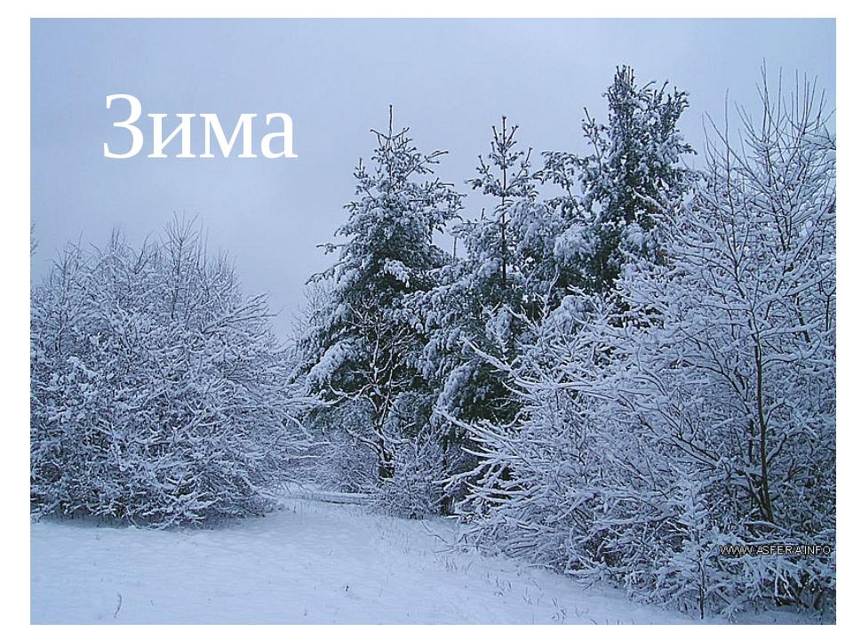 Зима Зима