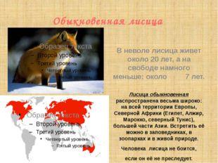 Обыкновенная лисица  Лисица обыкновенная распространена весьма широко: на вс