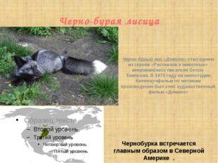 Черно-бурая лисица Чернобурка встречается главным образом в Северной Америке  .