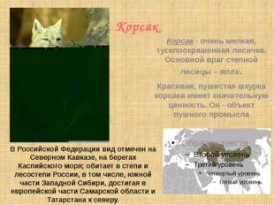 Корсак В Российской Федерации вид отмечен на Северном Кавказе, на берегах Ка