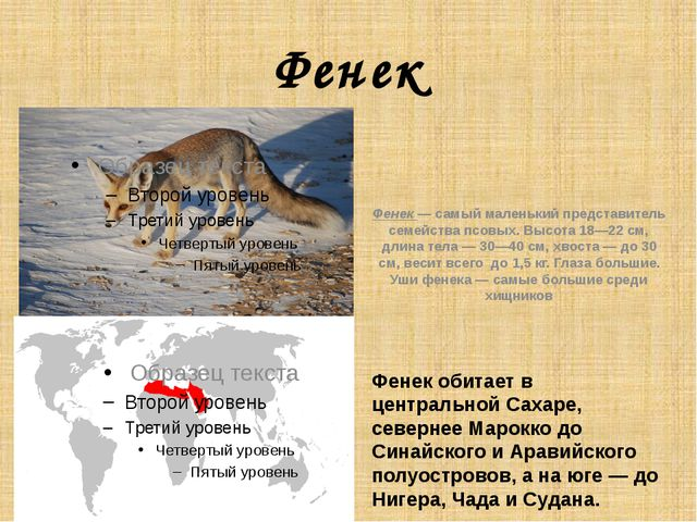 Фенек Фенек обитает в центральной Сахаре, севернее Марокко до Синайского и А...