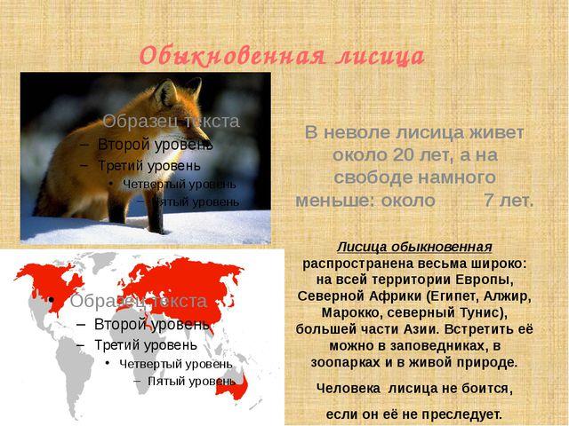 Обыкновенная лисица  Лисица обыкновенная распространена весьма широко: на вс...